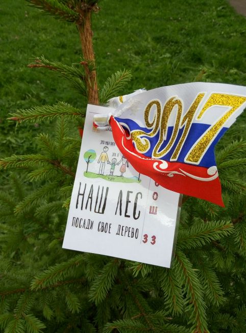 Подробнее: Наш лес. Посади свое дерево